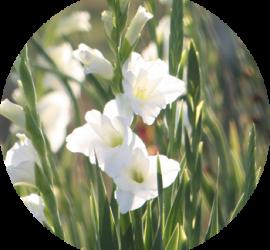 FI_cut_flowers